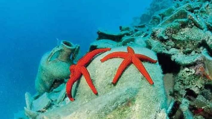 Denizyıldızı Batmasının Tedavisi