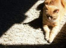 Kedi Tırmığı Hastalığı