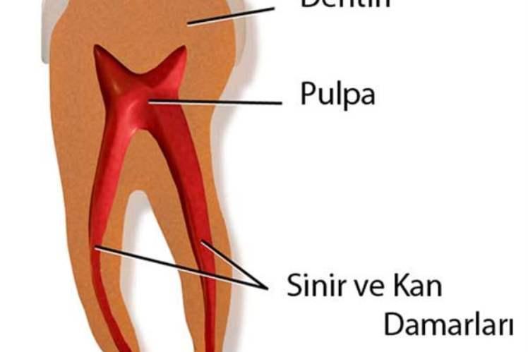 Doğumdan Yetişkinliğe Kadar Dişleriniz