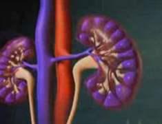 Kronik Böbrek Hastalığı (KBH) Komplikasyonlarından Nasıl Kaçınılır?