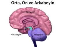 Beynin uyku mekanizması nasıl çalışır?