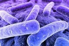 Salgın bakterilerin gen haritası çıkarıldı.