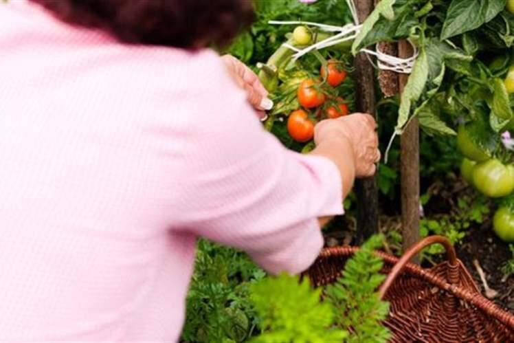 Her Kadının Tüketmesi Gereken Beş Organik Gıda