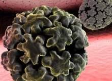 İnsan Papillom Virüsünün Neden Olduğu Siğiller Nasıl Yayılır?
