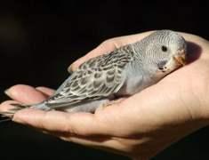 Ev Kuşlarında Kuş Gribi Tehlikesi: Endişe Etmeli misiniz?