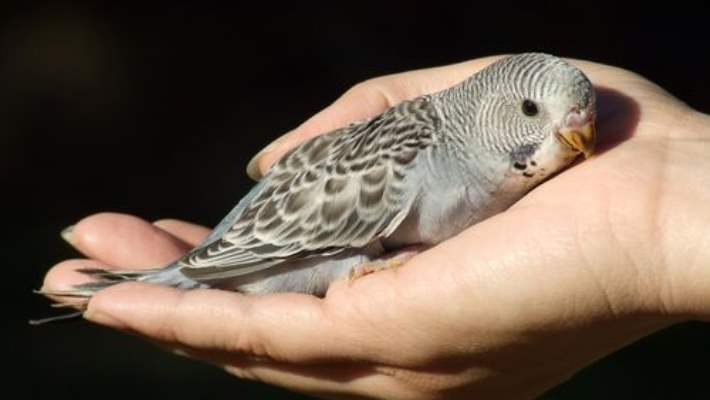 Kuş Gribine Hakkında En Yaygın 6 Yanlış Kanı
