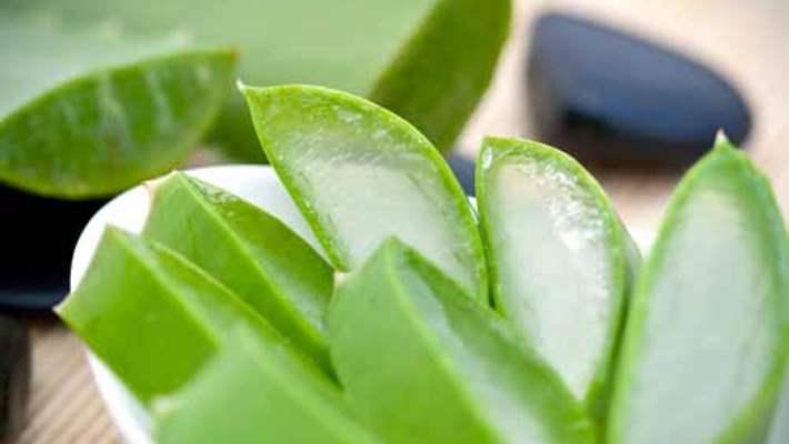 Aloe Vera: Cilt Bakımı İçin Mucizevi Bitki