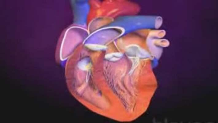 Kalp Hastalıkları Ve Homosistein