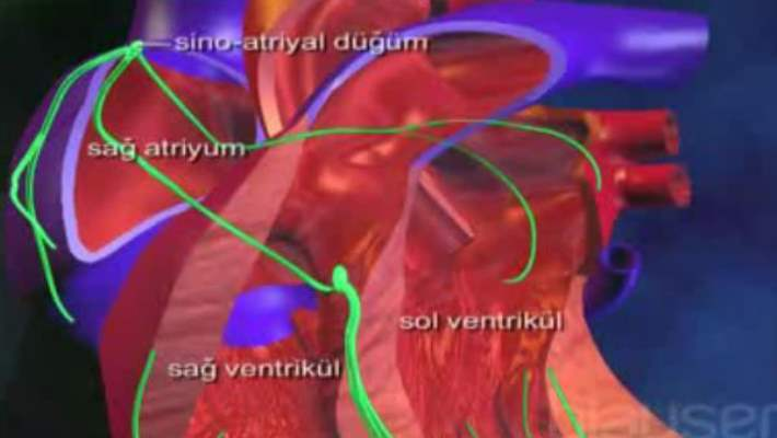 Kalp Hastalıkları Ve Restriktif Kardiyomiyopati