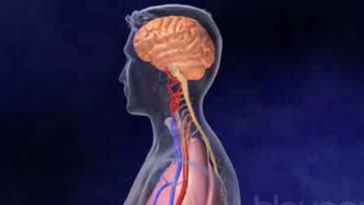 Beyindeki Kök Hücreler Tümöre Karşı Koruyor