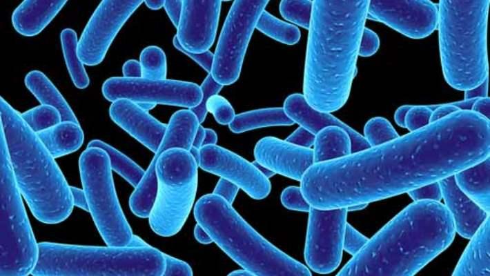 Bakteri Gıdaları
