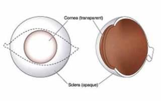 Gözakı ve Kornea
