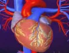 Gelecekte Kalp Hastalığı Tedavisi İçin Kök Hücreler
