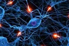 Sinir Sisteminin Gelişimi