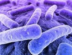 Yaygın Mikrop Ciddi Kan Enfeksiyonlarına Yol Açıyor
