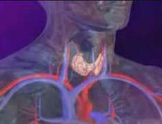 Hiperparatirodizm