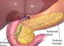 Sigara ve alkol, pankreasın da düşmanı