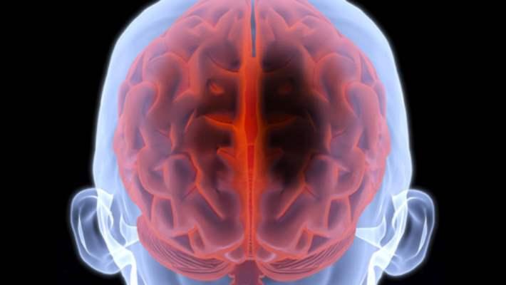 Foxm1 Proteini Beyin Tümörünün Büyümesini Engelliyor