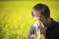 Alerjik Hastalıklar Tedavi Edilmezse Kronikleşebilir
