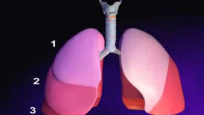 Akciğer Amfizeminin Etkilediği Vücut Fonksiyonları Hangileridir?