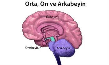 Beyin Sarsıntılarında Kalıcı Hasar Riski