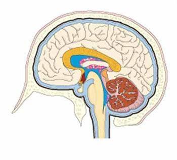 Beyin Travmasının Türleri