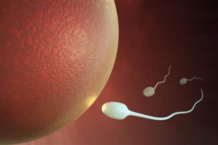 Yağlı Yemek Sperm Kalitesini Azaltıyor