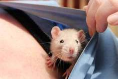 Kör köstebek faresi kanserle savaşta yeni umut