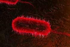 Biyolojik Ajanların Dolaşımı ve Tespit Edilmesi