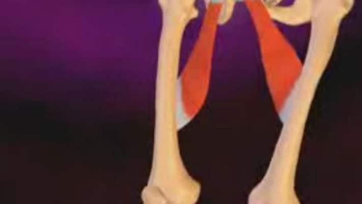 Alt Bacak Kırığı