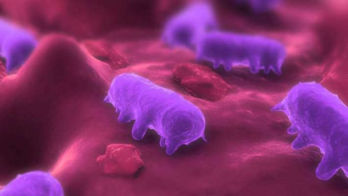 Salmonella: Kendinizi Bu Caniye Karşı Koruyun
