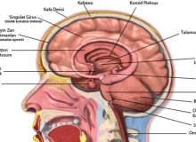 Beyin Lezyonları