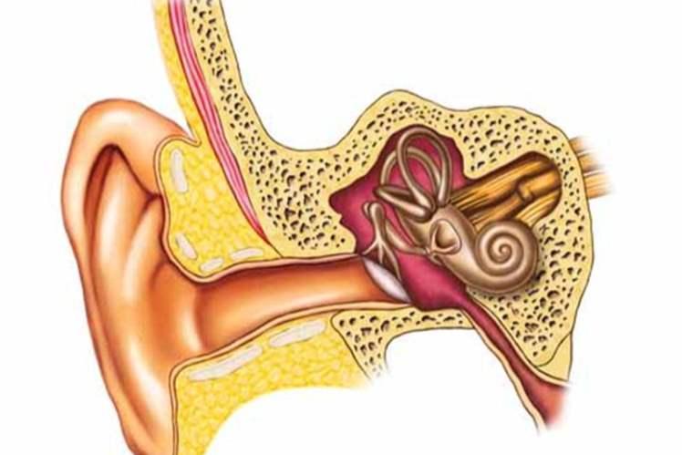 Kulak tüpleri