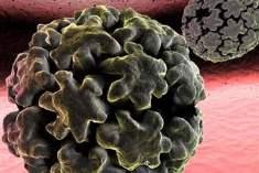 Papilloma (HPV) Aşısı: Şimdi Neyi Bilmeniz Gerekiyor?