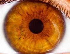 Sarı Nokta Hastalığını (AMD) Önlemenin 11 Yolu