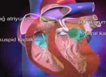 Kalp Kapakçığı Hastalığı