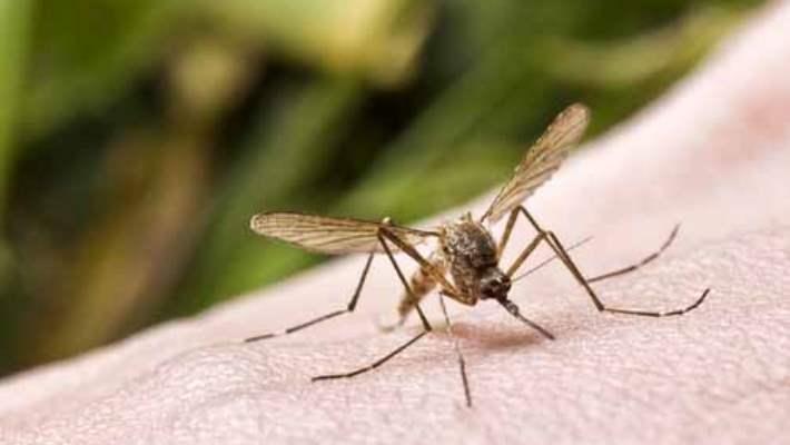 Kaçınmamız Gereken 7 Tropik Hastalık