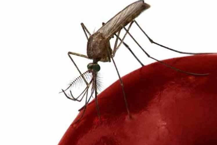 Dengue Ateşi