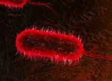 Ebola Hemorajik Ateşi