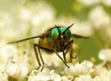 Böcek Isırıkları