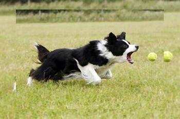 Evcil Hayvanlarınızdan Öğrenebileceğiniz 20 Şey