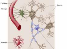 Otonom Nöropati