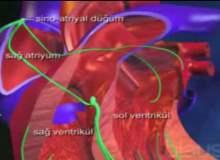 Yüksek Tansiyon ve Hipertansif Kalp Hastalığı