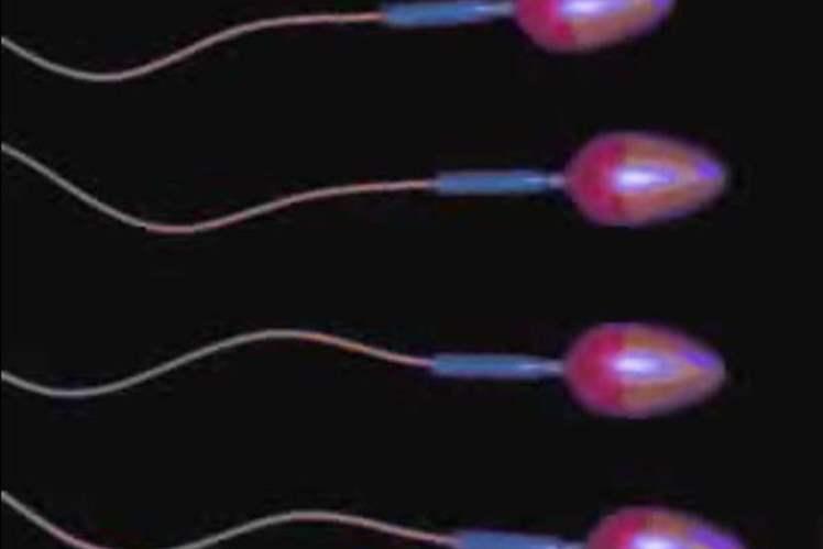 Sağlıklı Sperm