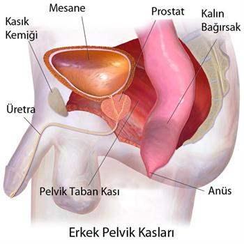 Penis Hastalıkları