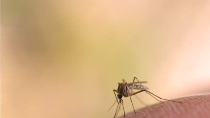 Böcek Isırmasının Yol Açtığı Cilt Tahrişleri