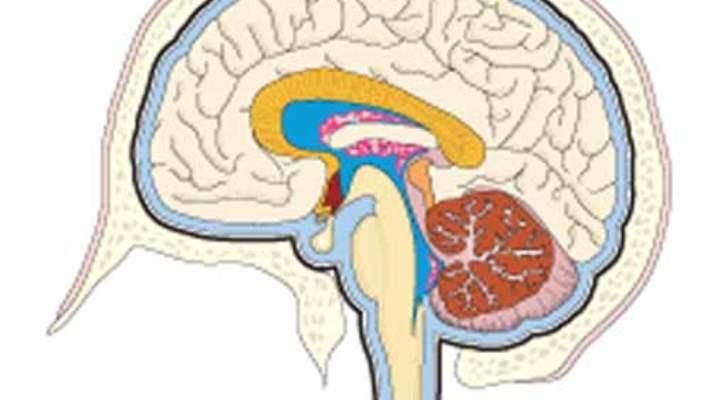 Beyin Nasıl Öğrenir?