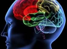 Hafızayı Güçlendirmek İçin Ne Yapmalıyız?