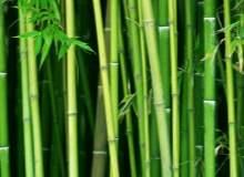 Tiroit Nodülü Tedavisinde Bitkiler