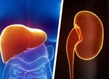 Karaciğer Yağlanması ve Böbrekler